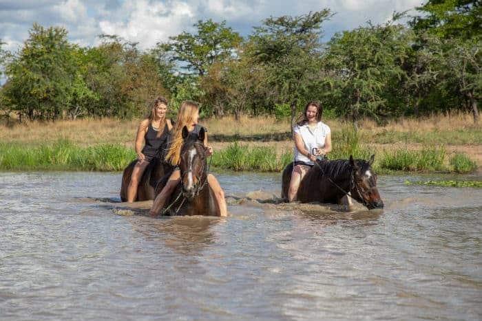 Horse Management Lion Conservation