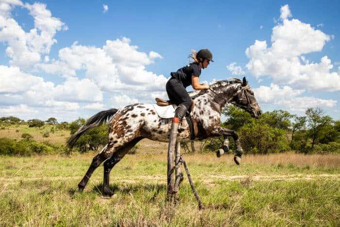 Horse Volunteering Project