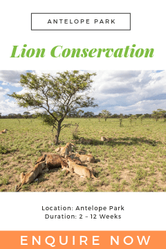Lion Conservation AP