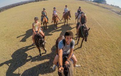 Volunteer with horses