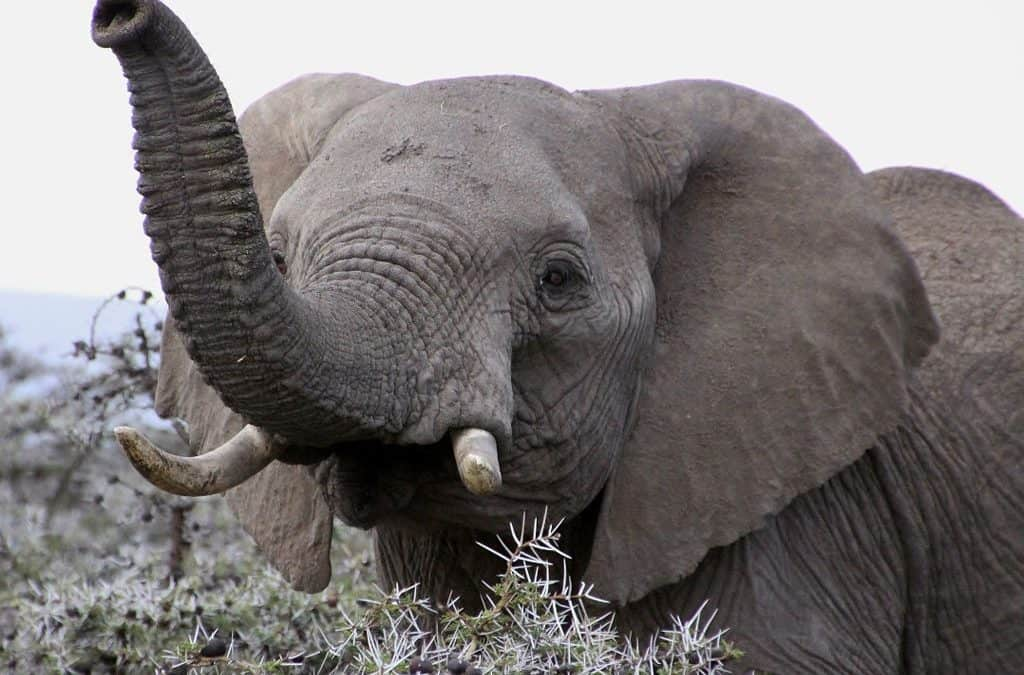 10 Funniest Facts You Will Learn About Elephants