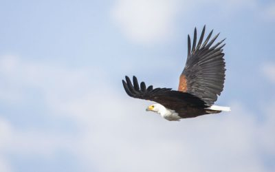 10 Incredible Birds to Photograph in the Zambezi National Park