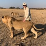 Community & Lion Conservation at Antelope Park 10