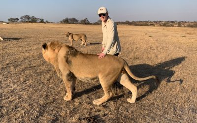 Community & Lion Conservation at Antelope Park 10