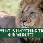What is happening to our wildlife