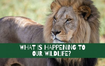What is happening to our wildlife?