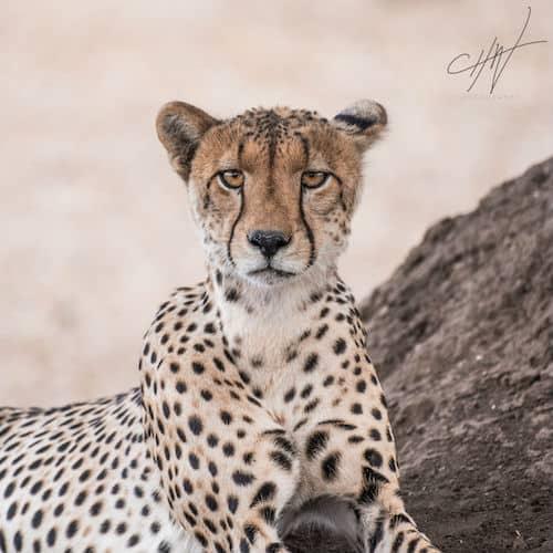 Framing Wildlife Portraits 1