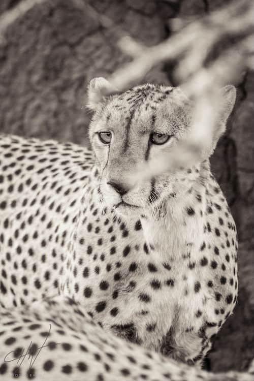 Framing Wildlife Portraits 2