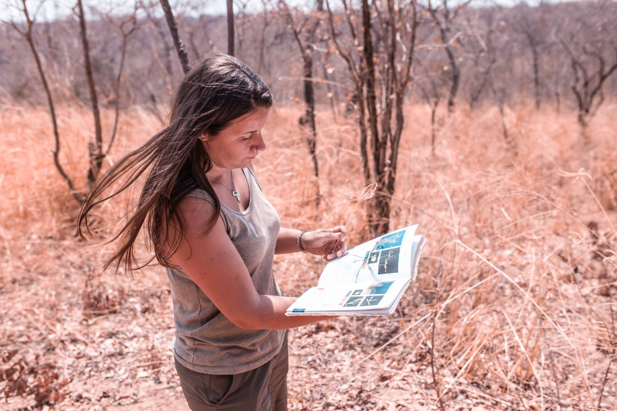 Volunteer with Zimbabwe Lions