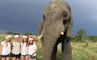 Things to do at Christmas in Africa