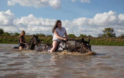 horse swimming in river
