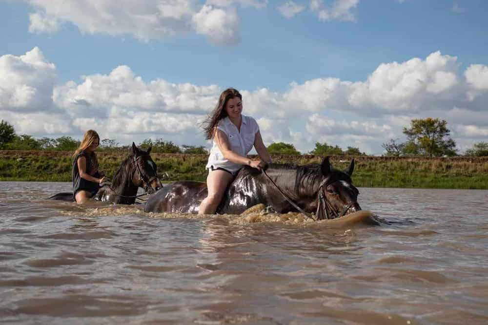 Can Horses Swim? Everything You Need To Know About Horse Swimming