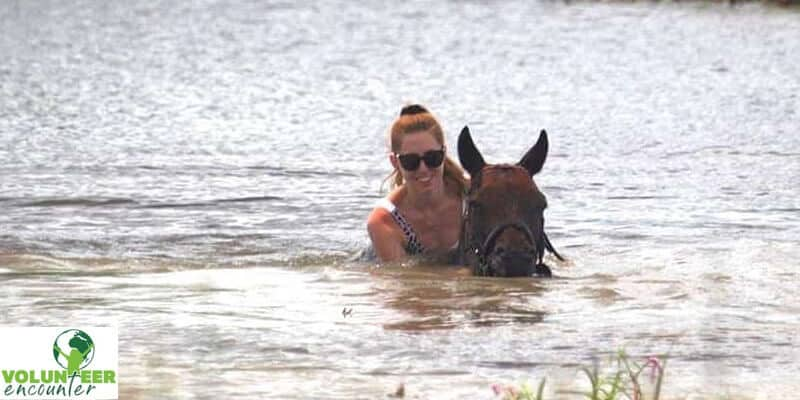 aqua exercising horse in river water