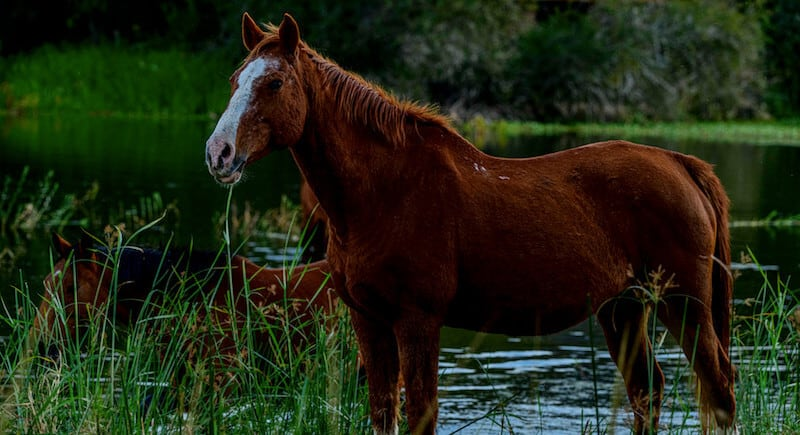 horse grazing by river side